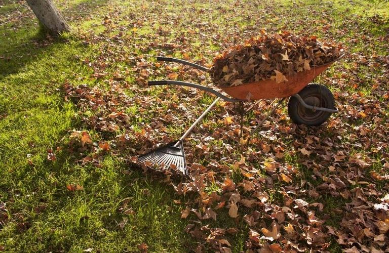 加拿大冬季整理后院落叶的好方法