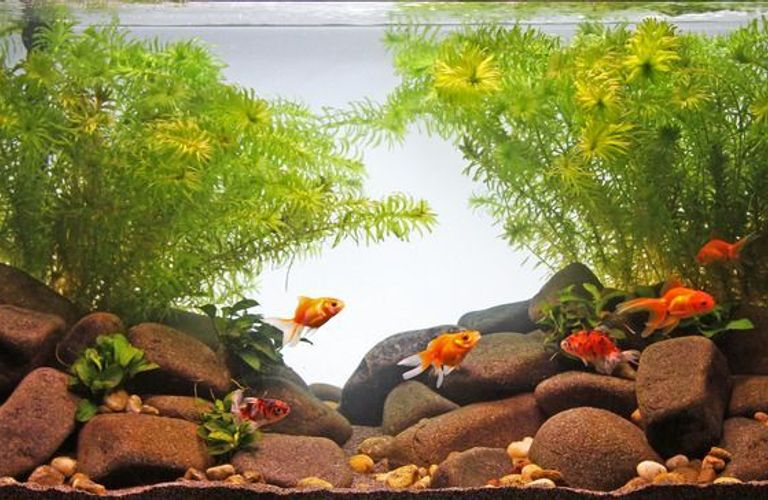 如何布置家中鱼缸