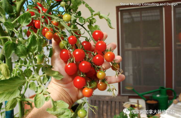 家里庭院种菜:如何在花盆里种出鲜嫩的蔬菜?