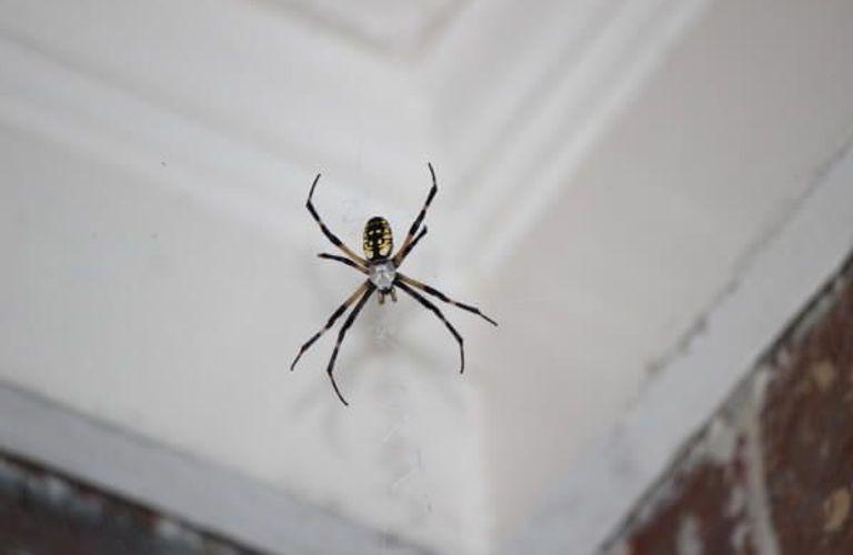10种办法有效清除你房间⾥里里的蜘蛛!