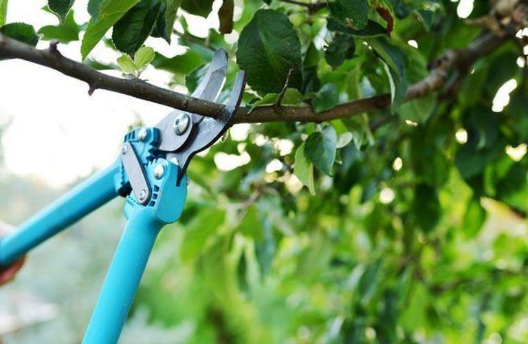 如何修剪后院树木